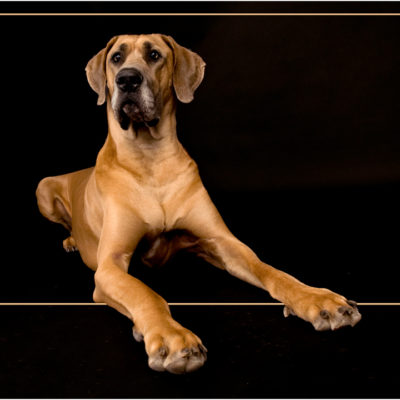 dog-cpp-1