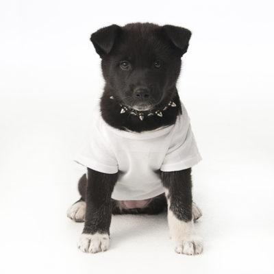 dog-pup1