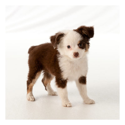 dogs_032
